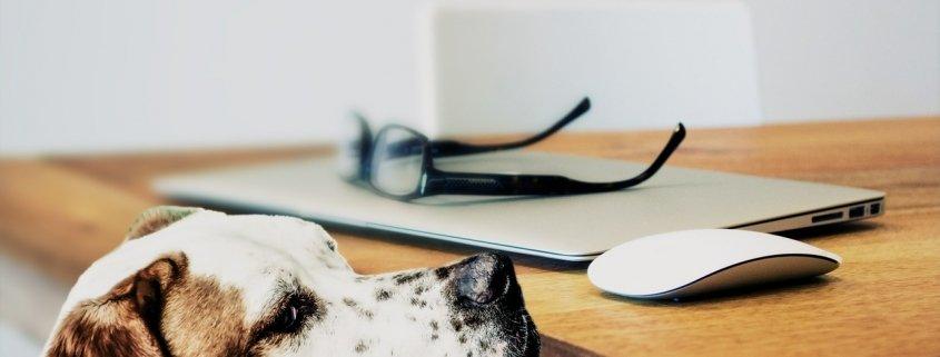 L'affidamento degli animali domestici  in caso di separazione tra i coniugi